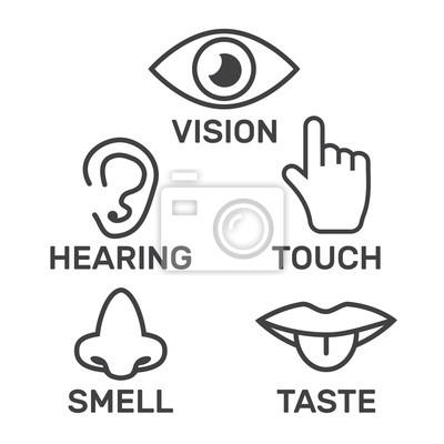 Riechen sehen schmecken hören Sinne