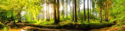 Fototapete Idyllischer Wald mit Bach bei Sonnenaufgang