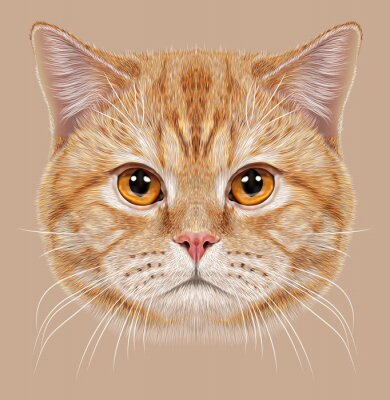 Fototapete Illustration der britischen Kurzhaar Kurzhaar Cat.