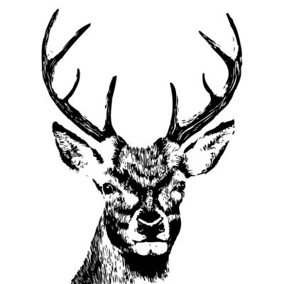 Fototapete illustration of a deer head, grunge, silhouette isolated on white