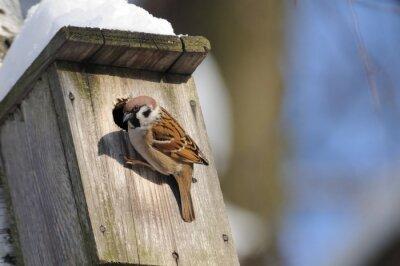 Fototapete Im Winter beenden Baum Sparrow untersucht mögliche Nest faci