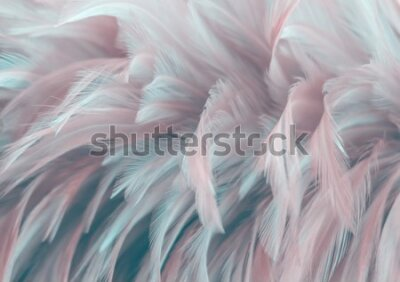 Fototapete Image nature art of wings bird,Soft pastel detail of design,chicken feather texture,white fluffy twirled on transparent background wallpaper Abstract. Coral Pink color trends and  vintage.