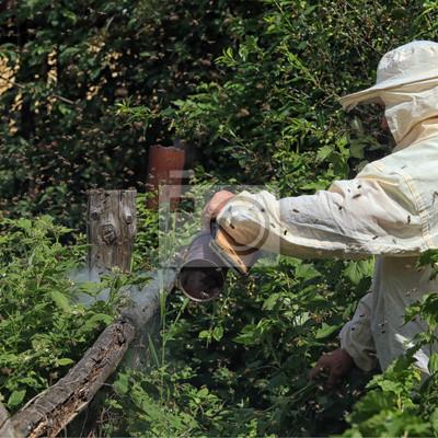 imker im schutzanzug im garten fototapete fototapeten apiarist honigbiene bienenzucht. Black Bedroom Furniture Sets. Home Design Ideas