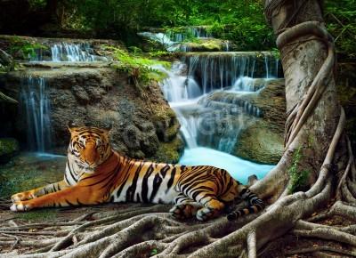 Fototapete Indochina Tiger mit Entspannung unter banyantree gegen schönen Natur pur Kalkstein Wasserfälle liegen Verwendung als natürliche Hintergrund, Hintergrund