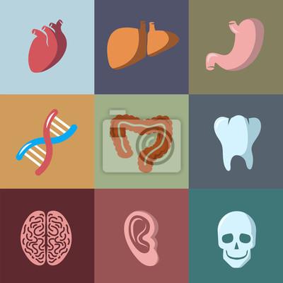 Interne menschliche organe flachen vektor-icons gesetzt. anatomie ...