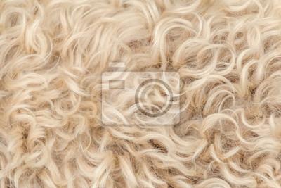 Fototapete Irish soft coated wheaten terrier white and brown fur wool
