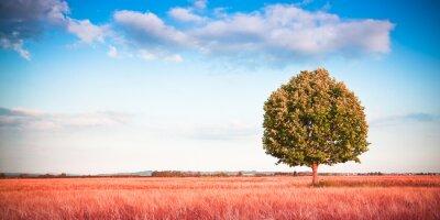 Fototapete Isoliert Baum in einem toskanischen Weizenfeld - (Toskana - Italien) - Getönten Bild mit Kopie Raum