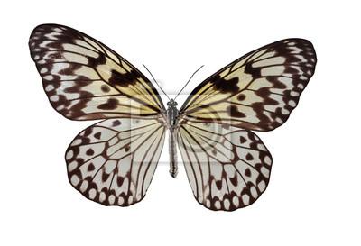 Isoliert weiße und schwarze Schmetterling