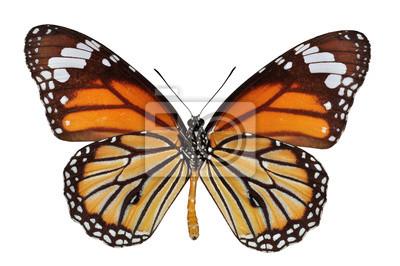 Isolierte Monarch-Schmetterling