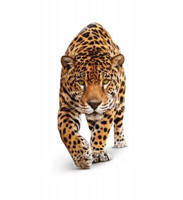 Fototapete Jaguar - Tier Vorderansicht auf weiß, Schatten isoliert