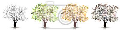 Fototapete Jahreszeiten des Baumvektors