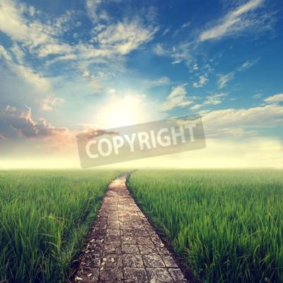 Fototapete Jahrgang Natur Hintergrund, Gras-Feld mit Himmel Sonne