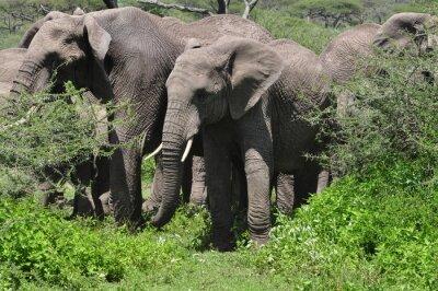 Fototapete Junge afrikanische Elefanten in Herde