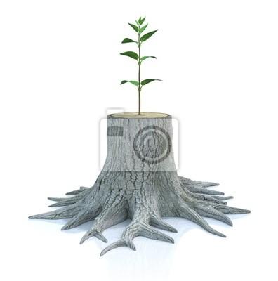Junger Baum Sämling wachsen von alten Baumstumpf