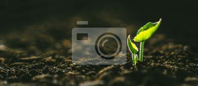 Fototapete Jungpflanze, die im Sonnenlicht wächst