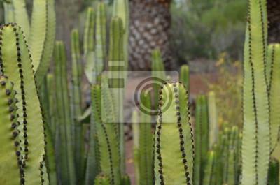 Kaktus mit Stacheln in Einem Botanischen Garten