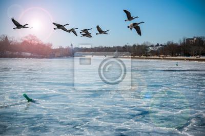 Kanadische Gänse über Frozen River