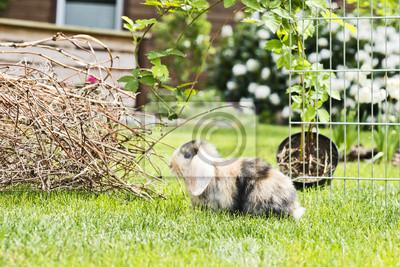 Fototapete Kaninchen Im Garten
