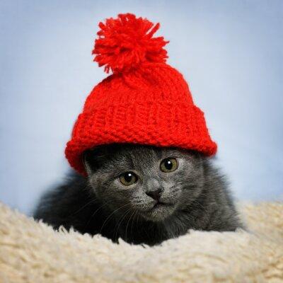Fototapete Kätzchen in einem roten Hut