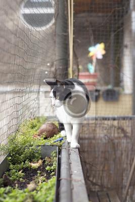 Fototapete Katze Auf Katzensicherem Balkon Mit Katzennetz