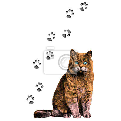 Katze mit pfoten skizzieren vektorgrafiken farbbild fototapete ...
