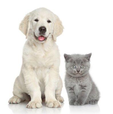 Fototapete Katze und Hund zusammen