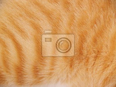 Fototapete Katzenfell Hintergrund
