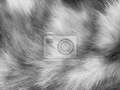 Fototapete Katzenfell Textur