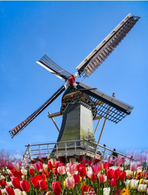 Fototapete Keukenhof - Niederlande