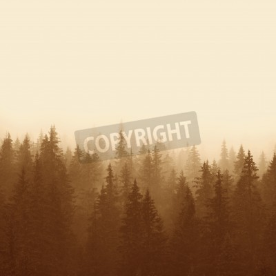 Fototapete Kiefernwald in den Bergen mit Nebel