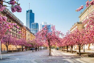 Fototapete Kirschbaumblüte in Frankfurt, Deutschland