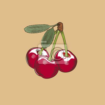 Kirsche im Weinleseart. Farbigen Vektor-Illustration