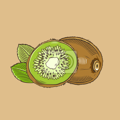 Kiwi im Weinleseart. Farbigen Vektor-Illustration