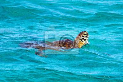 Kleine Antillen - Tobago Cays - Karettschildkröte