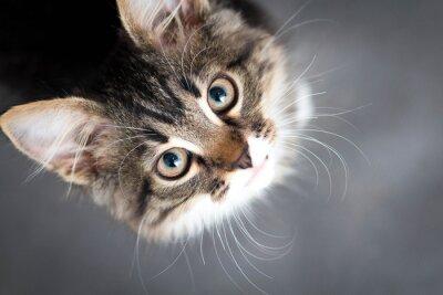 Fototapete kleine flauschige Kätzchen auf einem grauen Hintergrund