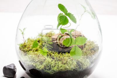 Kleine Grüne Pflanzen In Einem Glas Mit Selbstökosystem Fototapete