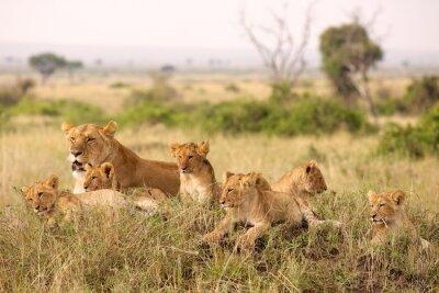Fototapete Kleine Löwenbabys entspann