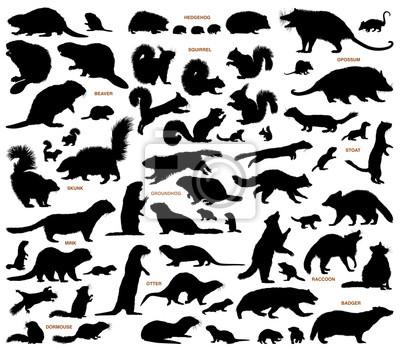Fototapete Kleine Säugetiere der nördlichen Länder Vektor Silhouetten Sammlung