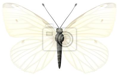 Kleine weiße - Pieris rapae