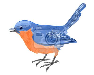 Kleiner Vogel, blau, orange