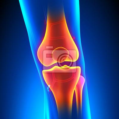 Knie anatomie schmerzkonzept mit kreislauf-system fototapete ...