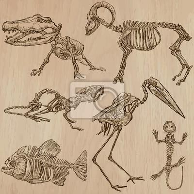 Knochen, schädel, skelette - freihänder, vektor fototapete ...