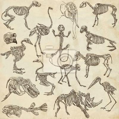Knochen und schädel verschiedener tiere - freihände fototapete ...