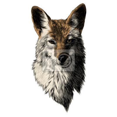 Ausgezeichnet Farbbilder Von Tieren Bilder - Beispiel Wiederaufnahme ...