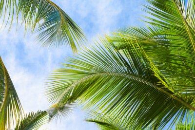 Fototapete Kokosnuss-Palmblätter