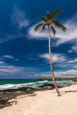 Fototapete Kokosnuss-Palme an einem hawaiianischen Strand, große Insel