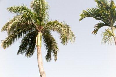 Fototapete Kokosnussbaum und blauer Himmel im Sommer Strand