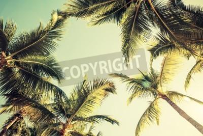 Fototapete Kokosnusspalmen über hellen Himmel im Hintergrund. Vintage-Stil. Getönten Foto mit Filterwirkung