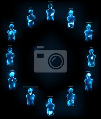 Konzeptionelle anatomie wallpaper fototapete • fototapeten Rektum ...