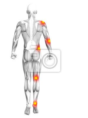 Konzeptionelle menschliche muskelanatomie mit roter und gelber ...